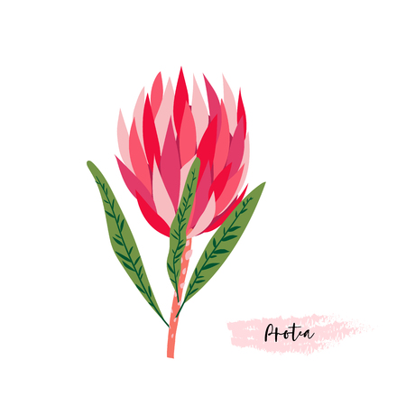 Set of protea flowers in a digital modern art at a bright pink, red, rose and green colors.