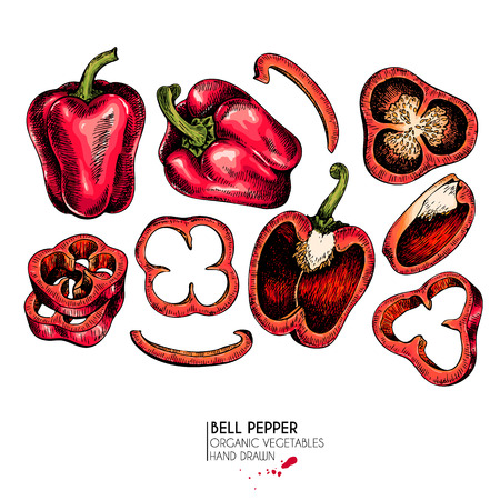 Vector hand drawn set of farm vegetables.