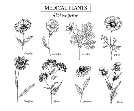 Hand drawn wild hay flowers, medical herbs and plants. Calendula, chamomile, cornflower, celandine, cosmos, yarrow, thistle, echinacea. Engraved cosmetic essential oil package herbal tea medicine. Illustration