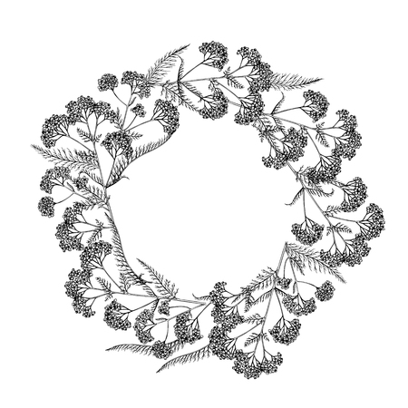 Hand drawn wild hay flowers. Yarrow milfoil weed. Medical herb. Vintage engraved art. Round wreath composition. For cosmetics, medicine, treating, aromatherapy, nursing, package design health care