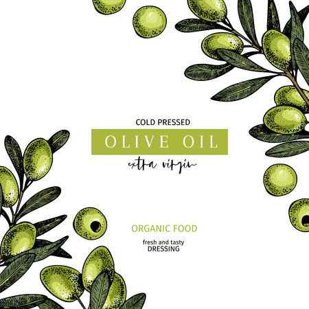 Hand drawn label of extra virgin olive oil. Vector colored vintage art. Set of farm vegetables. Organic sketched vegetarian objects. Use for restaurant, menu, package, market, flyer, template