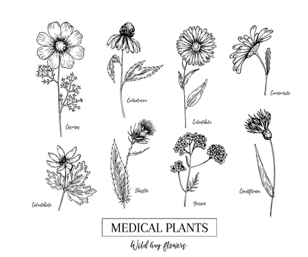 Hand drawn wild hay flowers. Medical herbs and plants. Calendula, Chamomile, Cornflower, Celandine, Cosmos, Yarrow, Thistle, Echinacea. Engraved Cosmetic essential oil package herbal tea medicine Çizim