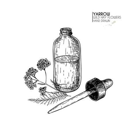 Hand drawn set of essential oils. Vector yarrow milfoil flower. Medicinal herb with glass dropper bottle. Engraved art. for cosmetics, medicine, treating, aromatherapy, package design health care Ilustracja