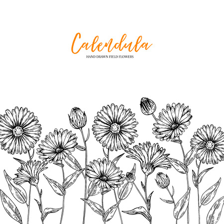 Hand drawn wild hay flowers. Calendula flower. Medical herb. Vintage engraved art. Border composition. Good for cosmetics, medicine, treating, aromatherapy, nursing, package design health care