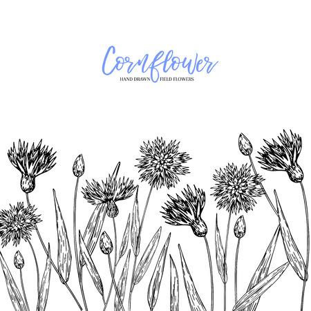 Hand drawn wild hay flowers. Cornflower flower. Medical herb. Vintage engraved art. Border composition. Good for cosmetics, medicine, treating, aromatherapy, nursing, package design health care