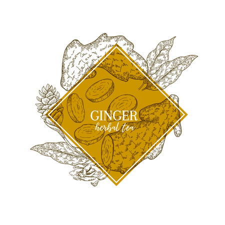 Hand drawn ginger root and leaves. Engraved vector banner. healing. Food ingredient, aromatherapy, cooking. For cosmetic package design, medicinal herb, treating, healt care Illusztráció