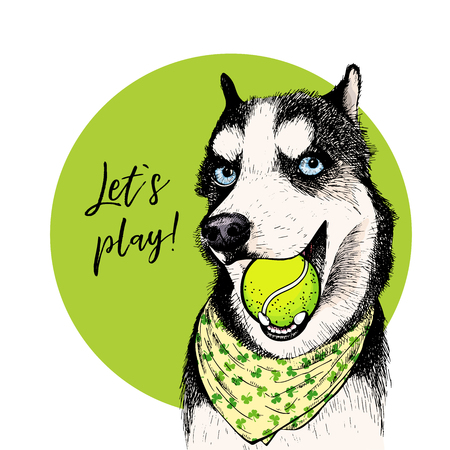 Vector portrait of Siberian husky dog with tennis ball. Let s play. Green curveball. Summer cartoon illustration. Hand drawn pet portait. Poster, t-shirt print, holiday, postcard, summertime.