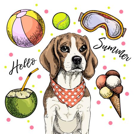 Vector portrait of beagle dog. Hello summer cartoon illustration. Coconut cocktail, balls, ice cream. Hand drawn pet portait. Poster, t-shirt print, holiday celebration, postcard, summertime Ilustração