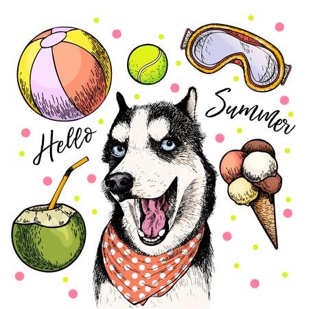 Vector portrait of Siberian husky dog. Hello summer cartoon illustration. Coconut cocktail, balls, ice cream. Hand drawn pet portait. Poster, t-shirt print, holiday celebration, postcard, summertime.