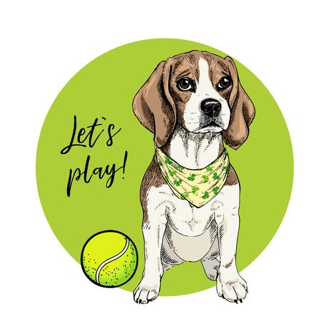 Retrato de vector de perro beagle con pelota de tenis. Vamos a jugar. Curva verde y fondo. Ilustración de dibujos animados de verano. Retrato de mascota dibujado a mano. Cartel, estampado de camiseta, vacaciones, postal, verano.