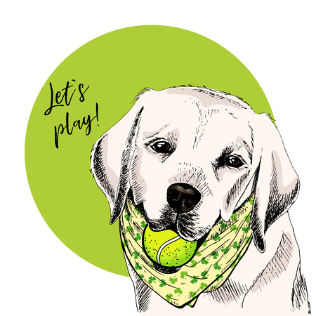 Vector portrait of Labrador retriever dog with tennis ball. Let s play. Green curveball. Summer cartoon illustration. Hand drawn pet portait. Poster, t-shirt print, holiday, postcard, summertime
