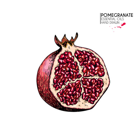 Hand drawn half pomegranate. Vector engraved colored illustration. Juicy natural fruit. Food healthy ingredient. For cooking, cosmetic package design, medicinal herb, treating, healt care Vectores