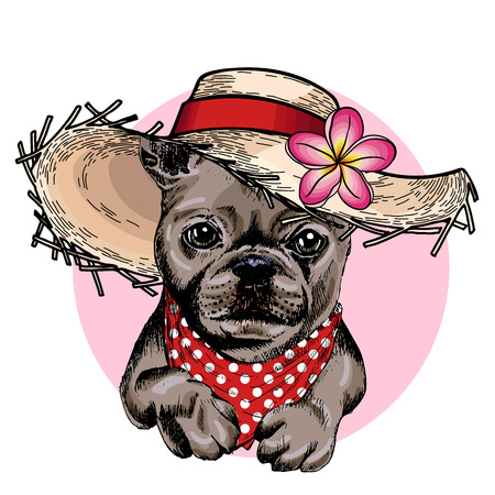 Vector portrait of French bulldog dog wearing straw hat, flower and polka dot bandana. Summer fashion illustration. Hand drawn pet portait. Poster, t-shirt print, holiday, postcard, summertime