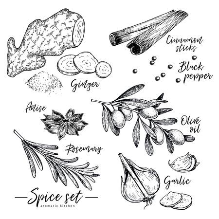 Conjunto de hierbas, especias y condimentos dibujados a mano. Vector iconos de jengibre, canela, anís, aceite de oliva, romero y ajo. Ilustración grabada. Uso para diseño de menú de restaurante, empaque, libro de cocina.