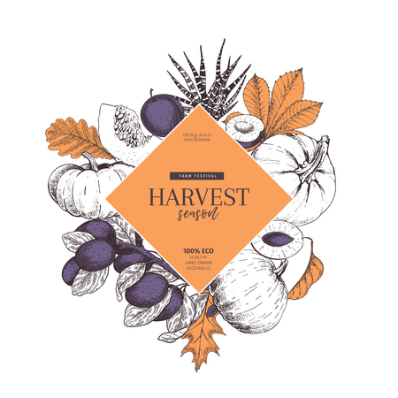 Hand drawn banner of autumn harvest fruits, vegetables. Vector vintage engraved style. Pumpkin, plum, oak, mapple, chestnut leaves. Fall holiday flyer. Thanksgiving, farm festival, food market design