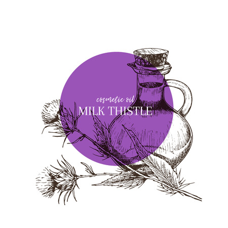 Hand drawn set of essential oils. Vector milk thistle flower. Medicinal herb with glass dropper bottle. Engraved art. Good for cosmetics, medicine, treating, aromatherapy, package design health care