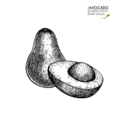 Hand drawn half and sliced avocado. Vector engraved illustration. Natural orgainc vegetable. Food healthy ingredient. For cooking, cosmetic package design, medicinal herb, treating, healt care