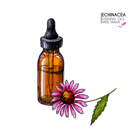 Hand drawn set of essential oils. Vector echinacea purpurea flower. Medicinal herb, glass dropper bottle. Engraved colored art. Ccosmetics, medicine, treating, aromatherapy, package design healthcare