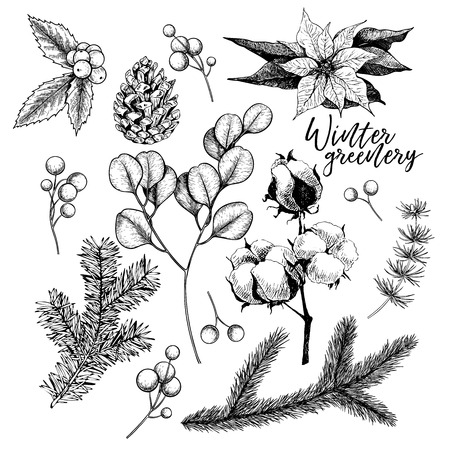 Hand drawn Christmas plants. Vector pine branch, fir, eucalyptus, holly, poinsettia, cotton. Xmas greenery. New Year greeting card. Winter seasonal greetings, party celebration Holiday poster