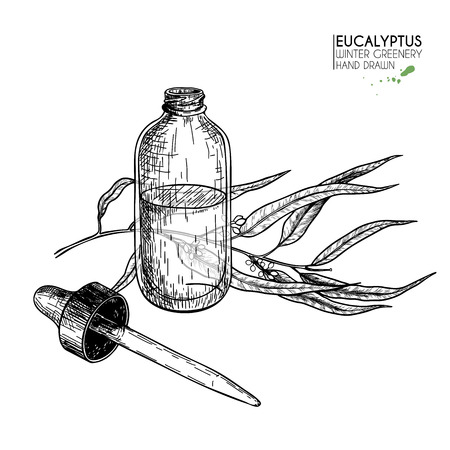 Hand drawn set of essential oils. Vector eucalyptus branch. Medicinal herb with glass dropper bottle. Engraved art. Good for cosmetics, medicine, treating, healthcare, package design,  aromatherapy Illustration