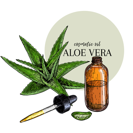 Hand drawn set of essential oils. Vector aloe vera branch. Medicinal herb with glass dropper bottle. Engraved colored art. For cosmetics, medicine, treating, healthcare, package design, moisturizing Иллюстрация