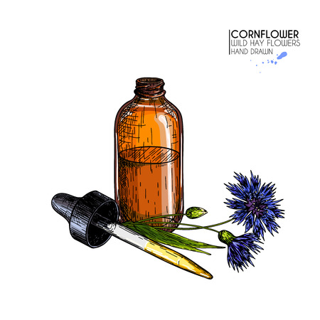 Hand drawn set of essential oils. Vector colored cornflower flower. Medicinal herb with glass dropper bottle. Engraved art. For cosmetics, medicine, treating, aromatherapy, package design health care