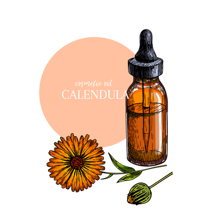Hand drawn set of essential oils. Vector colored calendula flower. Medicinal herb with glass dropper bottle. Engraved art. For cosmetics, medicine, treating, aromatherapy, package design health care Ilustração