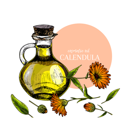 Hand drawn set of essential oils. Vector colored calendula flower. Medicinal herb with glass dropper bottle. Engraved art. For cosmetics, medicine, treating, aromatherapy, package design health care Standard-Bild - 126039206