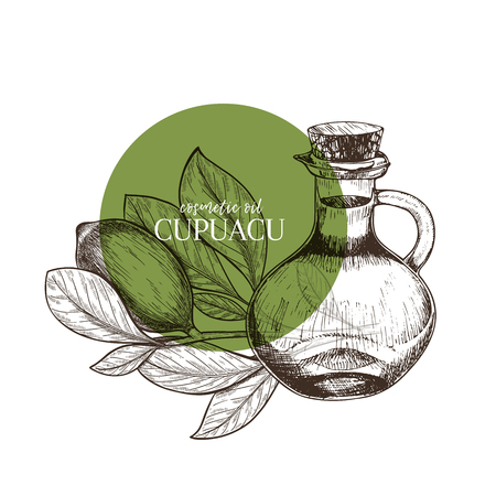 Hand drawn set of essential oils. Vector cupuacu nut butter. Medicinal herb with glass dropper bottle. Engraved art. Good for cosmetics, medicine, treating, aromatherapy, package design health care  イラスト・ベクター素材