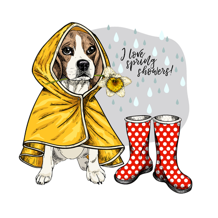 Hand drawn beagle with yellow raincoat and gumboots. Vector spring greeting card. Cute colorful dog with daffodil flower. I love spring rain. Lovely pet portrait. Poster, banner, flyer design