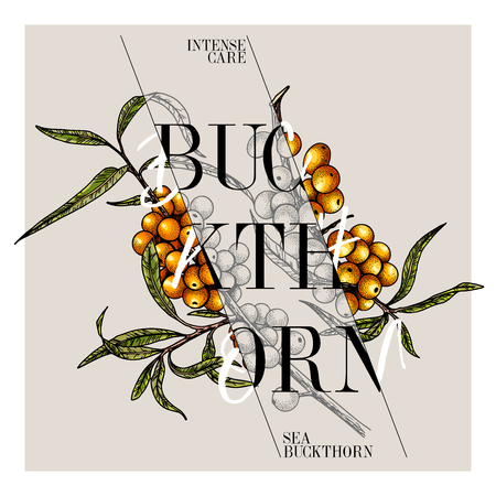 Hand drawn set of beauty product label design. Vector sea buckthorn cosmetic. Typography template. Engraved art. Essential oils, medicine, treating, aromatherapy, package design, health care Vector Illustration