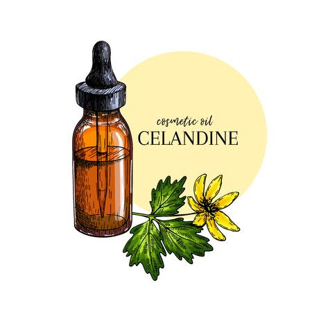 Hand drawn set of essential oils. Vector celandine flower. Medicinal herb with vintage glass dropper bottle. Colored Engraved art. Good for cosmetics, medicine, treating, package design healthcare Ilustración de vector