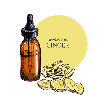 Hand drawn set of essential oils. Vector ginger branch. Medicinal spicy herb with glass bottle. Engraved colored art. Food condiment. Cosmetics, medicine, treating, cooking, package design