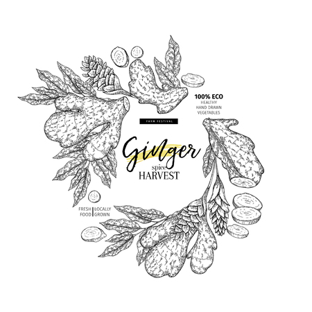 Hand drawn ginger root and leaves. Engraved vector banner. Food condiment package design temoplate. Food ingredient, aromatherapy, cooking. For cosmetic, medicinal herb, treating, healthcare Vettoriali