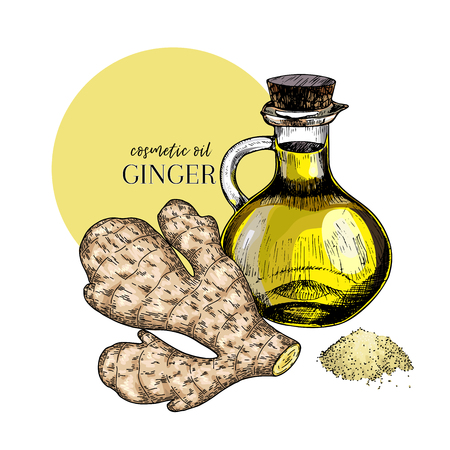 Hand drawn set of essential oils. Vector colored ginger branch. Medicinal spicy herb with glass bottle. Engraved art. Food condiment. Cosmetics, medicine, cooking, package design, food ingredient