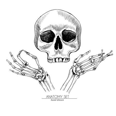 Hand drawn anatomy set. Vector human body parts, bones. Hand gesture and half of skull. Vintage medicinal illustration. Use for Haloween poster, medical atlas, science realistic image