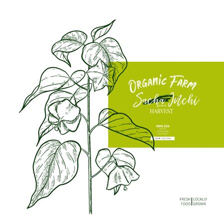 Hand drawnsacha inchi branch. Engraved vector banner. Moisturizing and healing. Essential oil, aromatherapy, rich protein serum. For cosmetic package design, medicinal herb, treating, healthcare