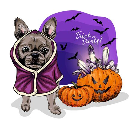 Vector portrait of French Bulldog dog wearing coat and pumpkins with crystal crown. Halloween illustration.Trick or treats. Hand drawn pet portait. Poster, print, postcard, seasonal greeting