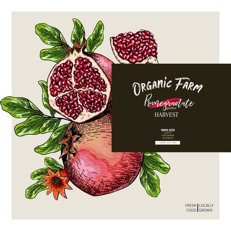 Hand drawn pomegranate composition. Vector engraved illustration. Juicy natural fruit. Food healthy ingredient. For cooking, cosmetic package design, medicinal herb, treating, healthcare Ilustração