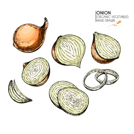 Vector hand drawn set of farm vegetables. Isolated whole, sliced onion and rings. Engraved colored art. Organic vegetarian food. Use for restaurant, menu, grocery, market, store, party, meal  イラスト・ベクター素材