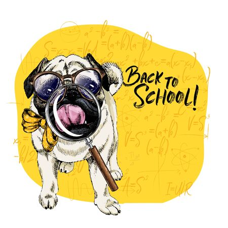 Vector portrait of Pug or Bulldog dog with magnifying glass and big nose reflection. Back to school illustration. Math formulas on background. Hand drawn pet portait. Study poster, student cartoon