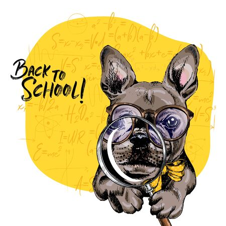 Vector portrait of french bulldog dog with magnifying glass and big nose reflection. Back to school illustration. Math formulas on background. Hand drawn pet portait. Study poster, student cartoon