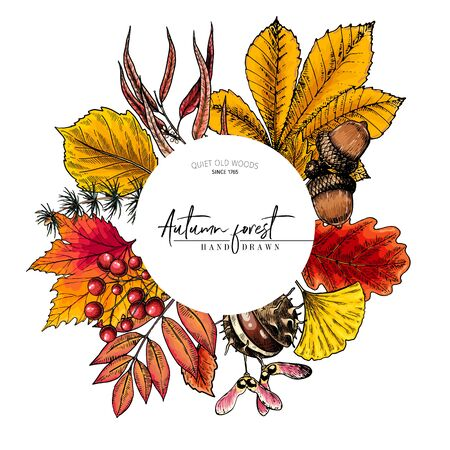 Hand drawn autumn leaf. Vector colorful tree leaves. Fall forest folliage. Maple, oak, chestnut, birch, acorn, ginkgo biloba, eucalyptus, willow, guelder rose pine Poster design holiday decoration