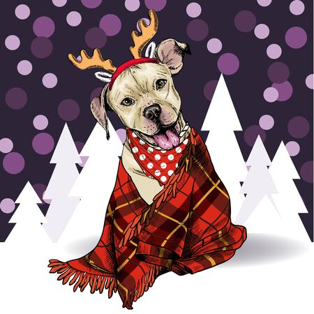 Hand drawn portrait of pit bull teriier dog wearing deer horn hat and plaid blanket. Vector Christmas poster. Xmas greeting card. Winter seasonal celebration. Colored new year pet portrait