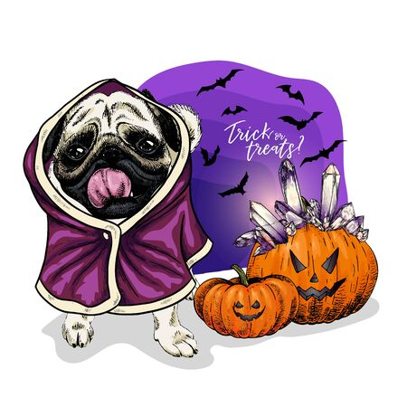 Vector portrait of Pug or Bulldog dog wearing coat and pumpkins with crystal crown. Halloween illustration.Trick or treats. Hand drawn pet portait. Poster, print, postcard, seasonal greeting