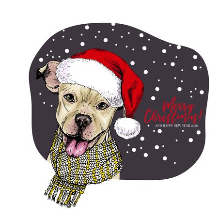 Hand drawn portrait of pit bull terrier dog wearing Santa hat and knitted scarf. Vector Christmas poster. Xmas greeting card. Winter seasonal celebration. Colored new year pet portrait
