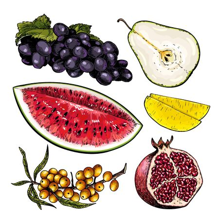 Hand drawn set of tropical fuits. Vector colored isolated objects. Sliced watermelon, pear, mango, pomegranate. Grape and sea buckthorn branch. Restaurant menu, food package. Summer exotic harvest Ilustrace