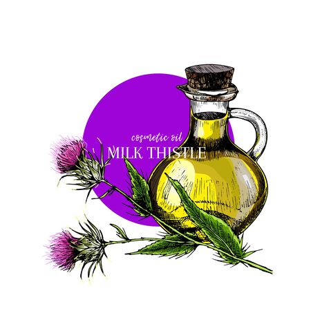 Hand drawn set of essential oils. Vector milk thistle flower. Medicinal herb with glass dropper bottle. Engraved coloredart. Cosmetics, medicine, treating, aromatherapy, package design healthcare