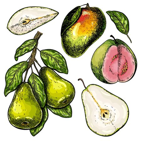 Hand drawn set of green tropical fuits. Vector colored isolated objects. Pear branch and slices, mango, guava. For restaurant menu, food package, poster design. Summer ripe exotic harvest