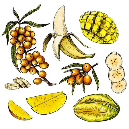 Hand drawn set of yellow tropical fuits. Vector colored isolated objects. Sea buckthorn branch and berry, banana, mango, starfruit or carambola. Restaurant menu, food package. Summer exotic harvest